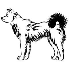 Vector image of an dog akita