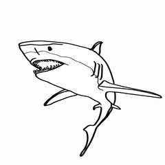 realistic shark and drawing