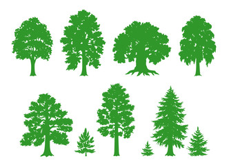 Silhouettes of trees - vector drawing
