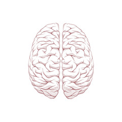 Human brain right and left hemisphere illustration. Creative concept vector design.