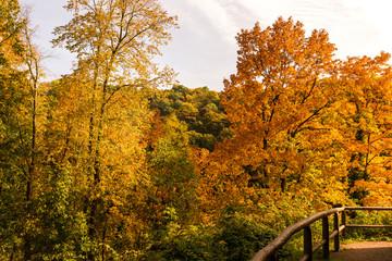 Herbstwald, bunte Blätter, Mischwald