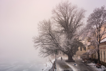 big tree on embankment inf fog and hoarfrost. beautiful winter cityscape near the frozen river in the morning