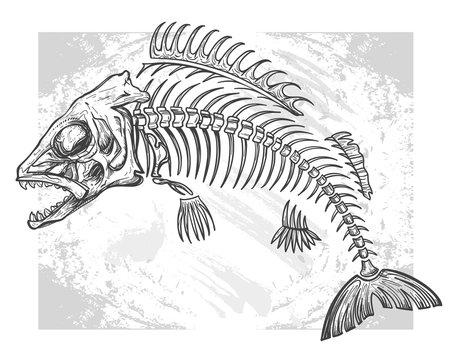 fishbone drawing