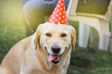 Smiling dog celebrates his birthday