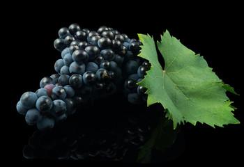 Uva Tempranillo con hoja sobre fondo negro