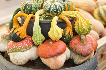 Beautiful and colored pumpkins