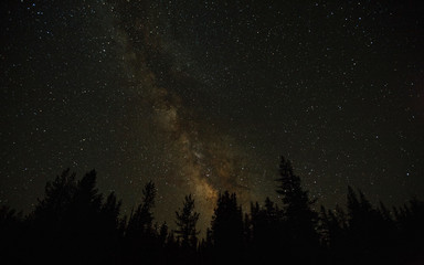 The Night Sky in the Forest