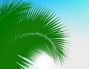 Illustration of coconut leaves texture.