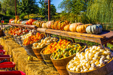 Barrels Of Squash On Display In Fall