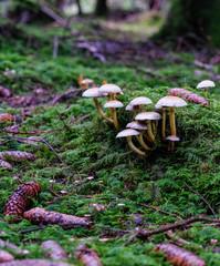 Kleine Pilze im Märchenwald