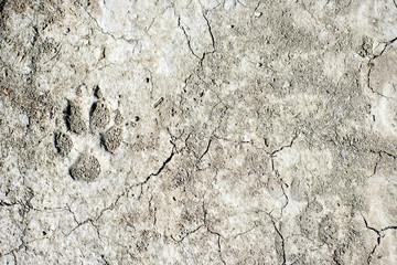 dog footprint on earth
