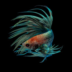 Acrylic Prints Fish Zombe