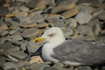 Seagull sits on the shore