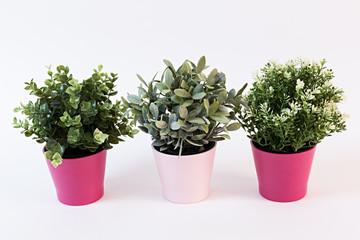 Plantas en maceteros rosas.