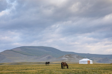 mongolian horses in a landscape of northern mongolia