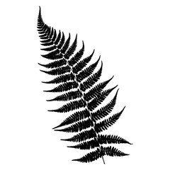 Silhouette of a fern. Black on white background. Vector illustration.