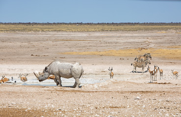 Etosha Waterhole with Black Rhino, zebra and sprinbok