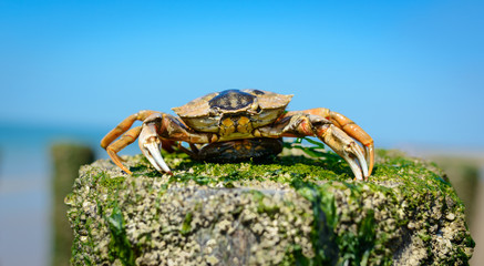 Wonderful capture of crab on the beach with blue sky