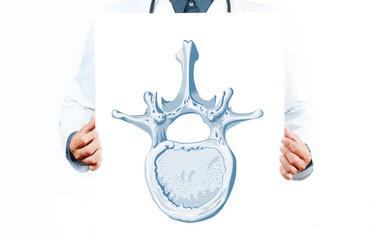 Doctor. Vector vertebra diagram showing parts of vertebra