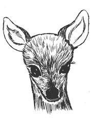little roe deer cub