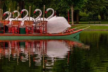 In de dag Zwaan Swans at Rest