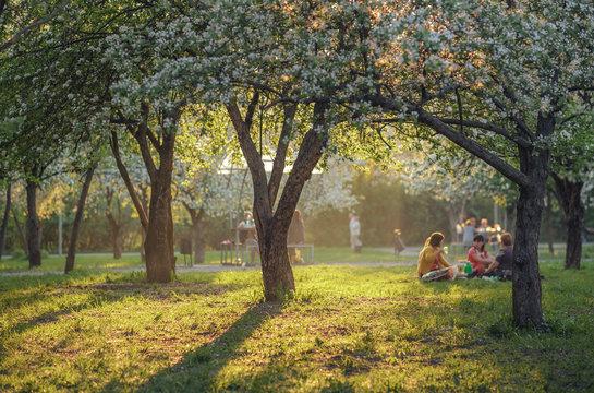 Apple tree garden picnic