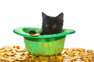 One black kitten in a Saint Patrick's Day themed green top hat with four leaf clovers laying on a bed of gold coins, 1 coin by paw, isolated on white background. Fun holiday theme with cats