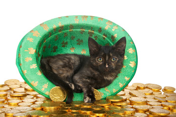 One Tortie kitten in a Saint Patrick's Day themed green top hat with four leaf clovers laying on a bed of gold coins isolated on white background. Fun holiday theme with cat