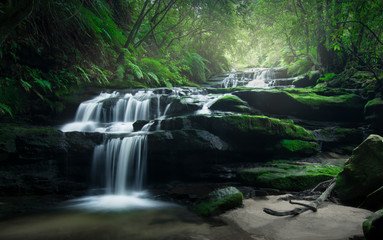 Smooth flowing water over rocks of Leura Cascades in the lush rainforest of Blue Mountains, Australia.  Fototapete