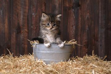 Cute Kitten With Straw in a Barn