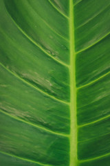 Close up of green leaf  background.
