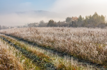 path through meadow in hoarfrost at sunrise. frosted grass and trees with slightly visible mountain in a distance. beautiful nature scenery in november