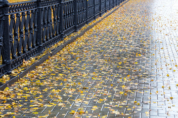 yellow fallen leaves on the surface of wet sidewalk in autumn