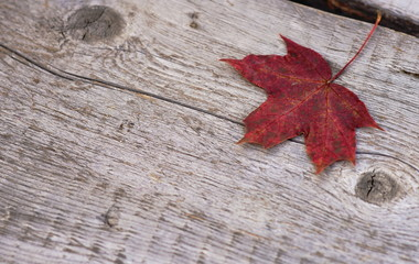 Autumn composition. One leaf on an old wooden background.Vintage.minimalism