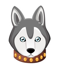 White And Gray Adult Siberian Husky Dog With Blue Eyes . Face of dog. Nice puppy for greeting card, pet shop or veterinary clinics. Web site page and mobile app design element.