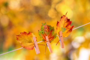 Colorful autumn leaves with a heart shape cut hanging on a clothesline by a clothespin