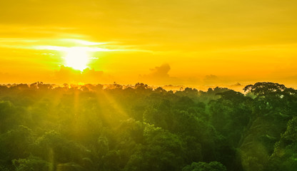 View on nice sunset over rainforest trees in Brazil