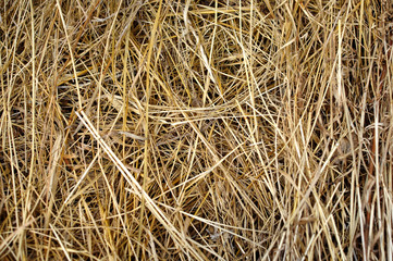 Texture of dry yellow hay, dry grass background