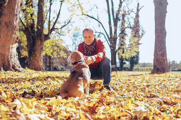 Man walks with his beagle in autumn park in sunny day