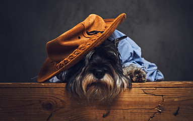 Fototapete - A dog dressed in a blue shirt and yellow hat.