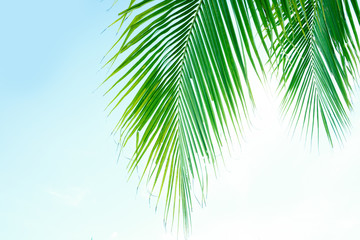 coconut leaves on sky background vintage color, retro Styles