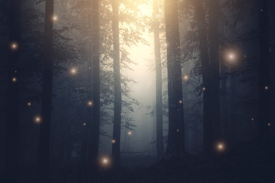 magical forest with sparkles at sunset