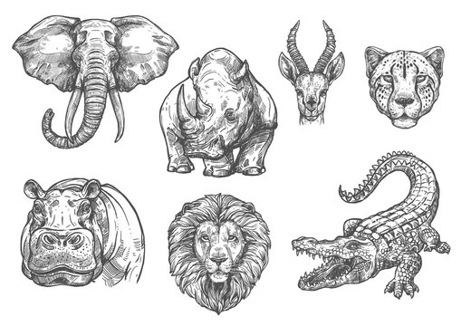 Vector sketch zoo wild African animals icons