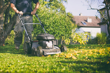 Mowing the grass with a lawn mower in early  autumn
