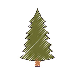 christmas pine with trunk on color crayon silhouette on white background