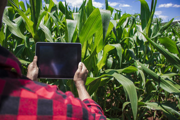 Farmer using digital tablet computer in cultivated corn field plantation. Modern technology application in agricultural growing activity. Concept Image.