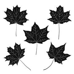 Set of black vintage maple leaves. Vector.