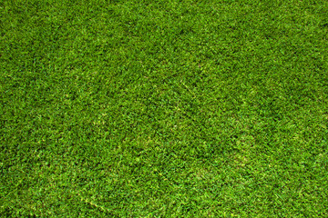 green grass pattern