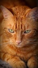 Gatto color giallo/ambra con occhi verdi