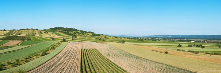 Landschaft mit Weingärten im nördlichen Burgenland bei Eisenstadt